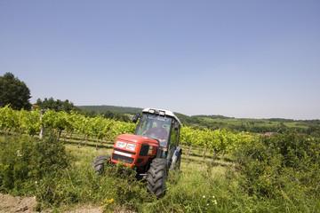 Der Weinbauer bei der Arbeit