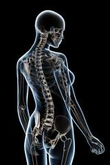 X-ray Anatomy on Black