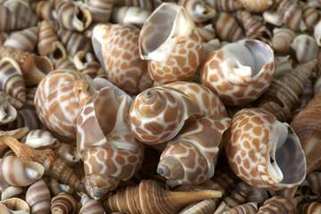 Seashells frame. Good for background.