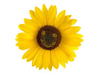 smiley sonnenblume