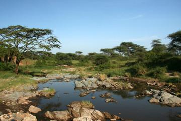 River - Serengeti Safari, Tanzania, Africa
