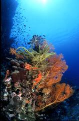 Unterwasserlandschaft mit Weichkorallen und Gorgonien