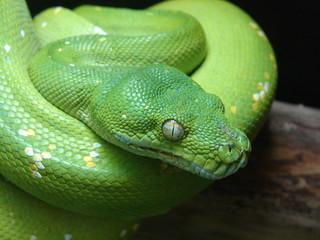 python vert des arbres
