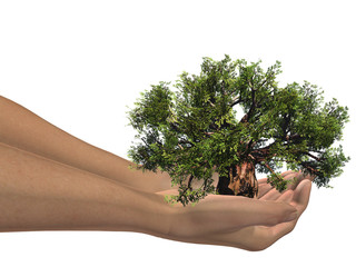 3D hands holding a 3D baobab tree