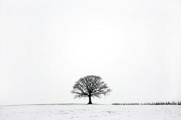 Oak Tree in Winter Snow Landscape