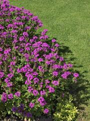 massif de fleurs sur pelouse