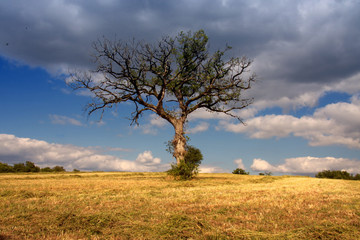 solitary tree with big clouds