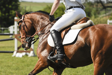 Printed roller blinds Horseback riding Pferdebeine