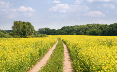 Canvas Prints Culture Landscape with yellow flowers and green forest