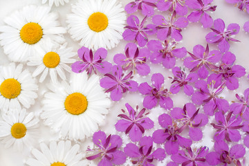 Daisywheels and violet flower