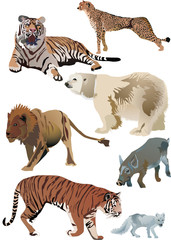 tigers and other animals