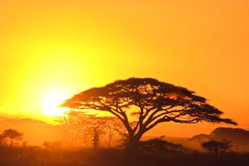 Sunset in the serengeti Wall mural