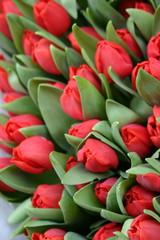Printed roller blinds Tulip Tulpen