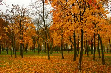Garden Poster Park in autumn with orange foliage