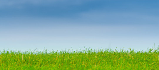 Foto op Plexiglas Weide, Moeras nature, herbe verte, ciel bleu paysage panoramique