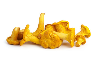 Fototapeta Small pile of chanterelle mushrooms obraz