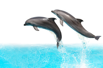 Photo sur Plexiglas Dauphins Jumping Dolphins