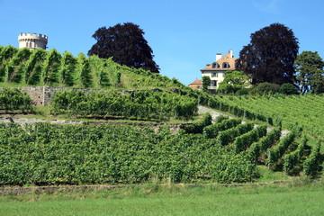 Wall Mural - Vigne en montagne suisse
