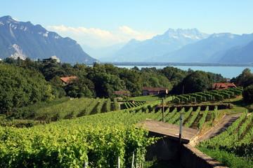 Fototapete - Vigne en montagne suisse