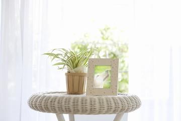 フォトフレームと観葉植物