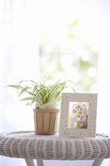 花の写真と観葉植物