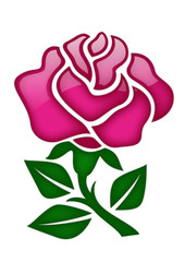 半透明の薔薇
