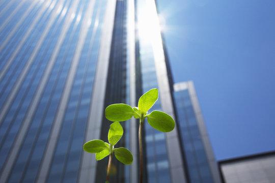 高層ビルと新芽