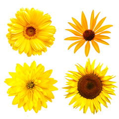 Yellow color flowers  isolated on white background