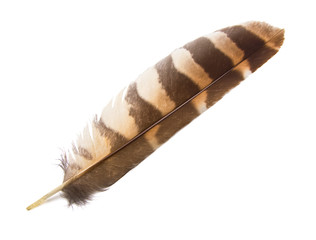 Owl Wing Feather Isolated