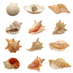 image of seashells on white background