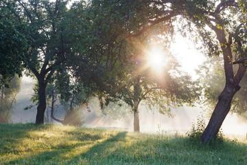 Summer forest, sun