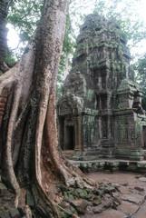 Temple Khmer, Ta Phrom