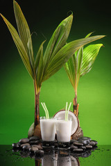Two glasses of cold coconut milk