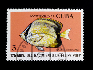 fish on  stamp