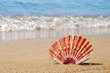 Sea shell on sea shore