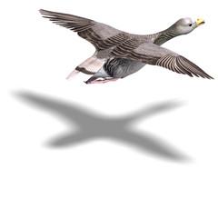 grey goose in flight