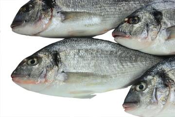Pacific fresh fish