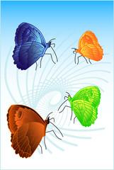 farfalle vettoriali