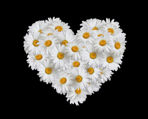Love, heart of daisies