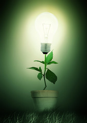 GO GREEN - Light Bulb Plant