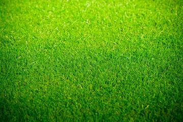 pelouse verte et tondue sur un golf - green