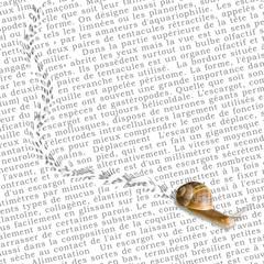 escargot et trace sur un texte