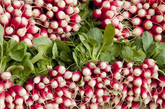 Bottes de radis sur un étalage de fruits et légumes au marché de