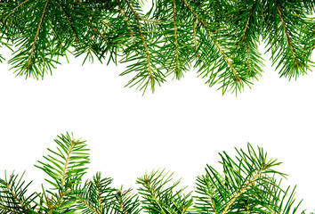 Pine branches frame