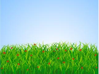 Grass lanscape