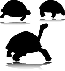 turtle on black vector silhouettes