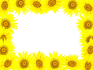 Frame from bright young sunflowers and a white background