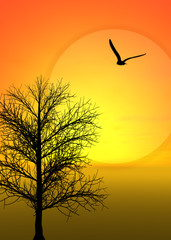 Tree and bird with beautiful sunset view