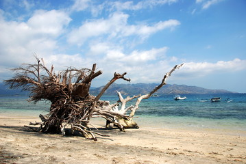 rooted out tree on the beach