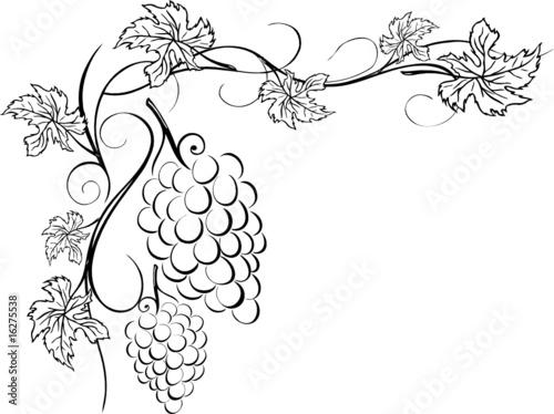 Wein, Weinrebe, Ranke, Weinblätter, Weintrauben\